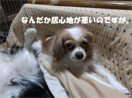 04_convert_20130412171945.jpg