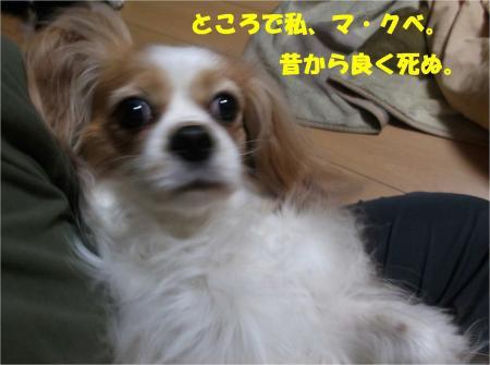 04_convert_20130416174127.jpg