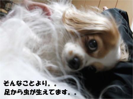 04_convert_20130418180932.jpg