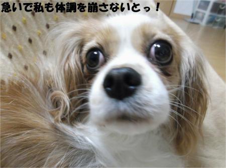 04_convert_20130429090420.jpg