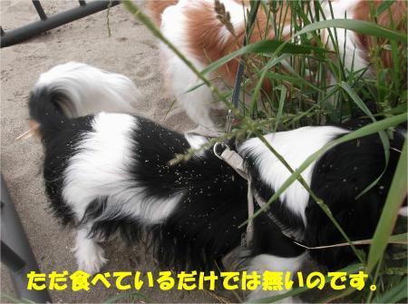 04_convert_20130603170031.jpg