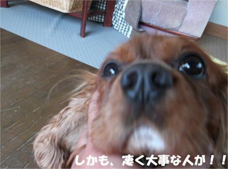 04_convert_20130604173331.jpg