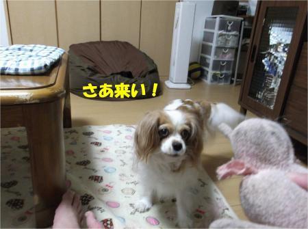 04_convert_20130611165429.jpg