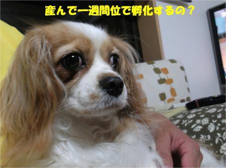 04_convert_20130613170345.jpg