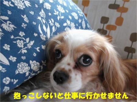 04_convert_20130614180241.jpg