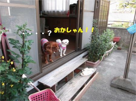 04_convert_20130617180208.jpg