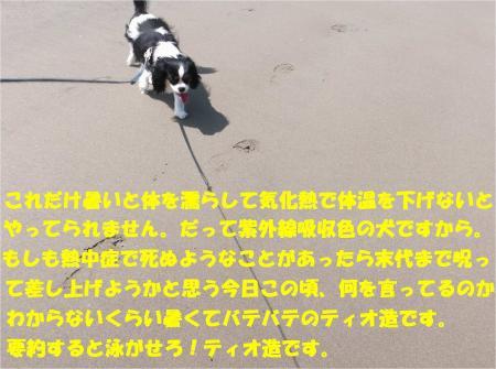 04_convert_20130624172123.jpg