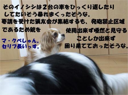 04_convert_20130627171420.jpg