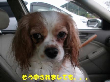 04_convert_20130701170611.jpg