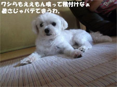 04_convert_20130712172111.jpg