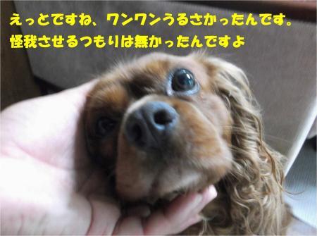 04_convert_20130724161308.jpg