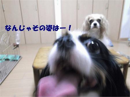 04_convert_20130730180449.jpg