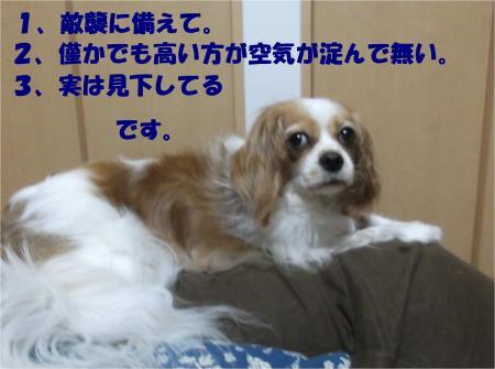 04_convert_20130806175740.jpg