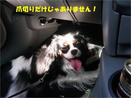 04_convert_20130902154633.jpg