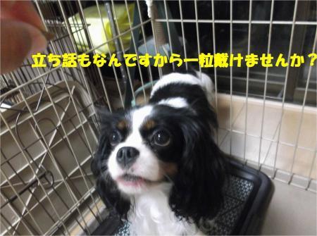 04_convert_20130906185930.jpg