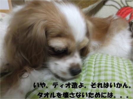04_convert_20130911184555.jpg