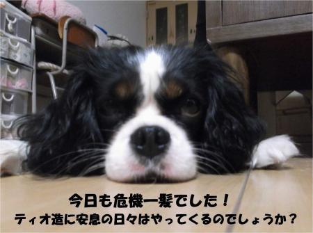 04_convert_20130926161123.jpg