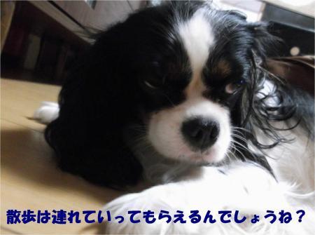 04_convert_20131004193649.jpg