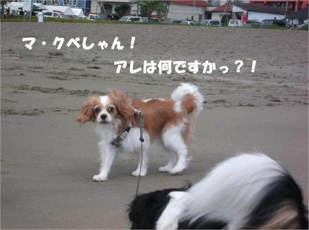 04_convert_20131007174115.jpg