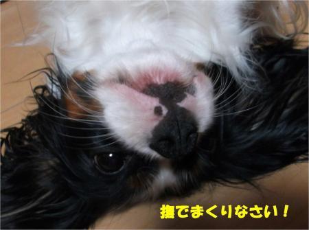 04_convert_20131009181609.jpg