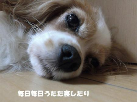 04_convert_20131017195448.jpg