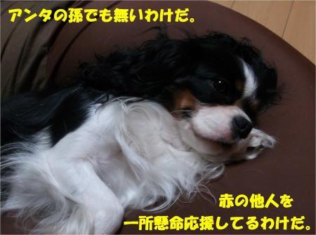 04_convert_20131018170939.jpg