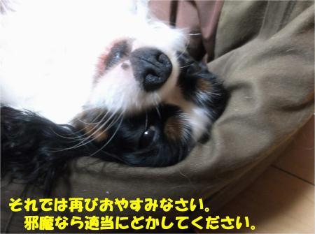 04_convert_20131030165404.jpg