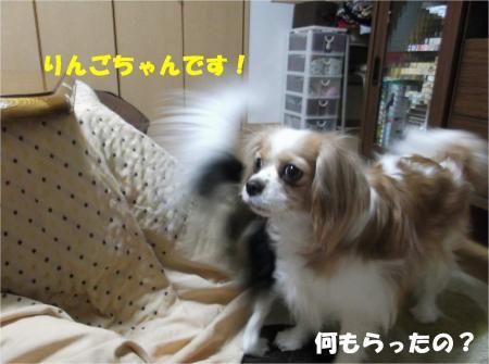 05_convert_20130402171311.jpg