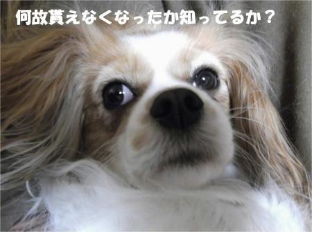 05_convert_20130403174623.jpg