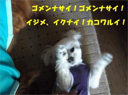 05_convert_20130410181012.jpg
