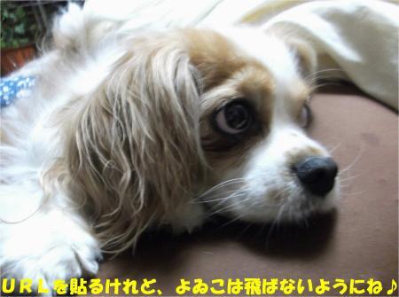 05_convert_20130418180943.jpg