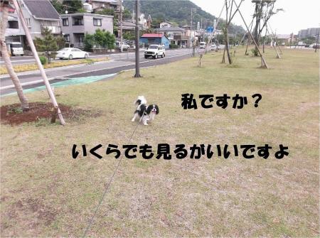 05_convert_20130513165854.jpg