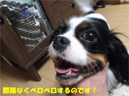 05_convert_20130515175727.jpg