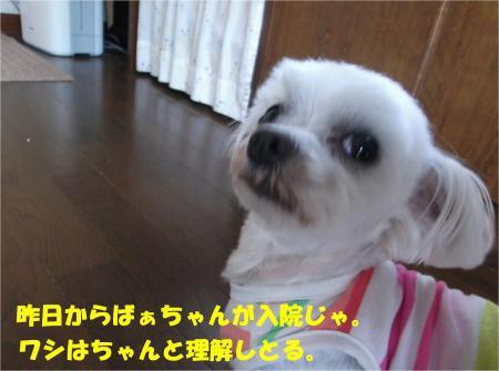 05_convert_20130604173342.jpg