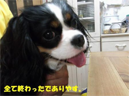 05_convert_20130606175830.jpg