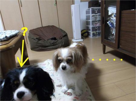05_convert_20130611165453.jpg