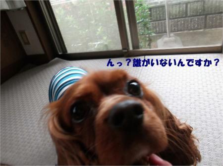 05_convert_20130612171204.jpg