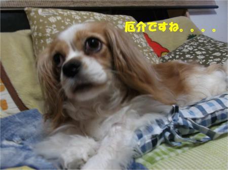 05_convert_20130618174045.jpg