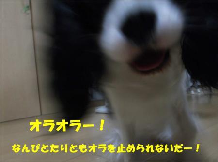 05_convert_20130627171430.jpg
