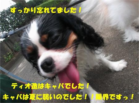 05_convert_20130708171135.jpg
