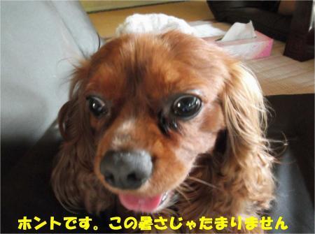 05_convert_20130712172122.jpg