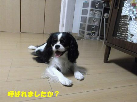 05_convert_20130805175705.jpg