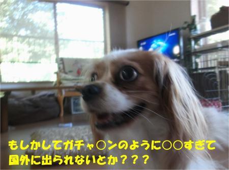 05_convert_20130820181336.jpg