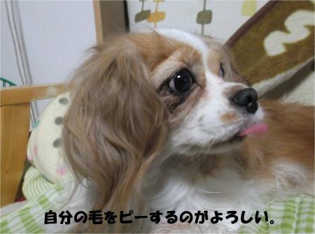 05_convert_20130911184605.jpg