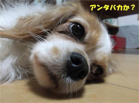 05_convert_20130912182641.jpg