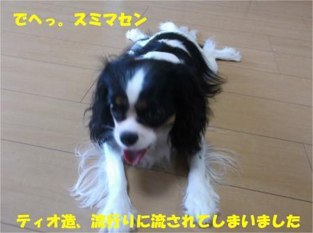05_convert_20130913172137.jpg