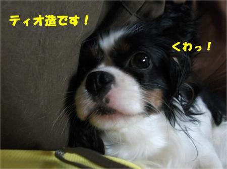 05_convert_20130927185434.jpg