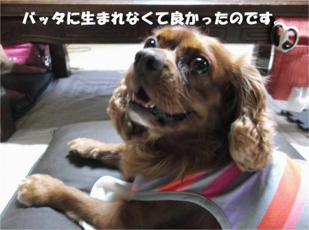05_convert_20131010174207.jpg