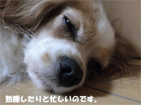 05_convert_20131017195613.jpg