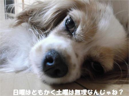 05_convert_20131025180014.jpg